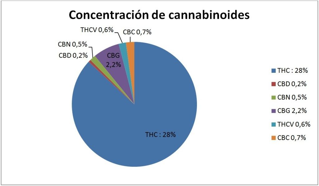 girl scout cookies grafico