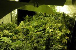 como hacer un cultivo indoor