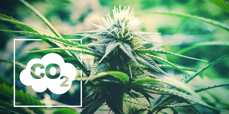 co2 para marihuana