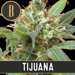 Tijuana Feminizada
