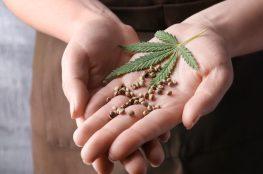 semillas-regulares-en-chile-1